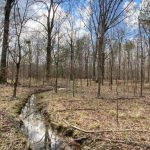 PINE LEVEL RECREATIONAL TRACT at  for 210000