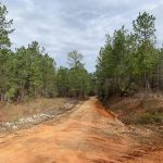 38 ACRES TIMBERLAND IN CRENSHAW CO. ALABAMA