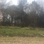 8.25 WOODED ACRES IN PIKE CO. AL